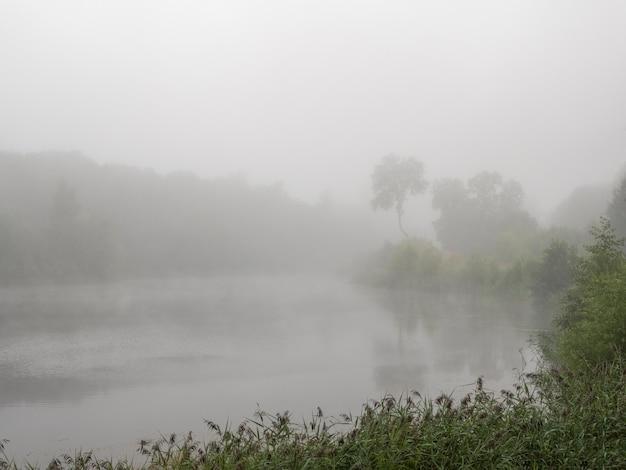 Mgła w lesie deszczowym, dżungla wodna wczesnym rankiem