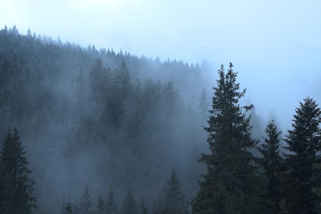 Mgła w tajemniczym lesie z sosnami