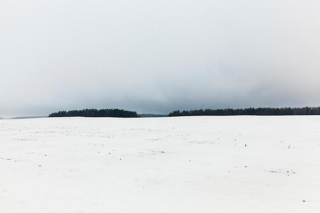 Mgła zimą - las zimą po ostatnich opadach śniegu, mgła i słaba widoczność sylwetki drzew i mgła na polu