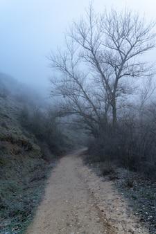 Mglisty krajobraz w lesie z polną drogą między nagimi nagimi drzewami. scena zimowa. sickles rio duraton, hiszpania