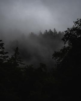 Mglisty krajobraz z lasem pokrytym mgłą pod ciemnymi burzowymi chmurami