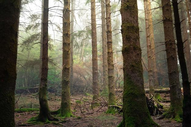 Mglisty las artikutza w górach basków