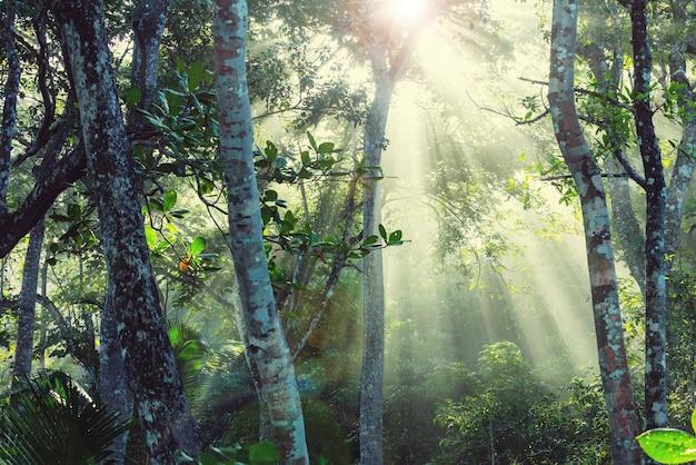 Mglisty las deszczowy w kostaryce, ameryka środkowa