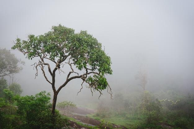 Mglisty las deszczowy z parą i wilgocią.
