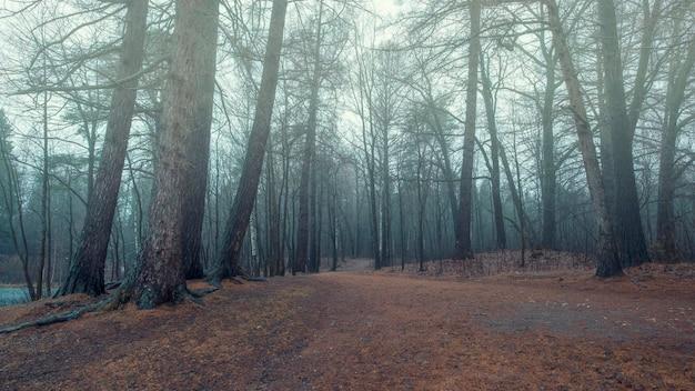 Mglisty las późną jesienią z niebieską mgiełką i opadłymi czerwonymi liśćmi