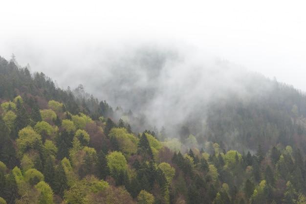 Mglisty mgłowy góra krajobraz z jedlinowym lasem w niskiej lying on the beach chmurze. karpaty.