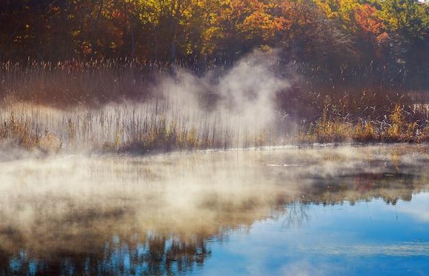 Mglisty poranek na rzece. jesienny krajobraz z trzcinami na pierwszym planie i drzewami w tle. piękna przyroda we mgle. smutny nastrój