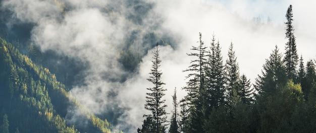 Mglisty poranek w górach