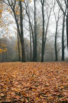 Mglisty poranek w parku po opadnięciu liści, jesień w środku jesieni z nagimi drzewami liściastymi