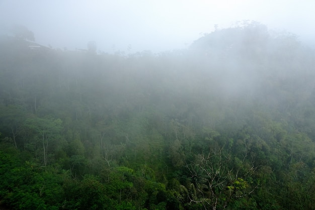 Mglisty poranek z widokiem na wzgórza