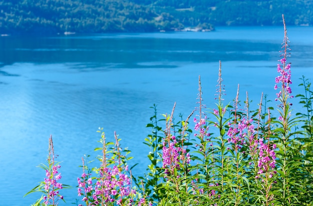 Mglisty widok na fiord lato z różowymi kwiatami z przodu