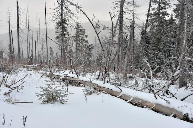 Mglisty zimowy krajobraz z zwalonym drzewem.