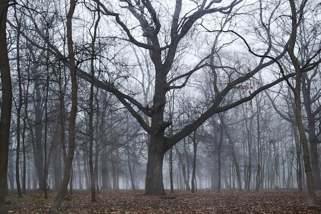 Mgłowy Las Ze Starym Dużym Drzewem Premium Zdjęcia