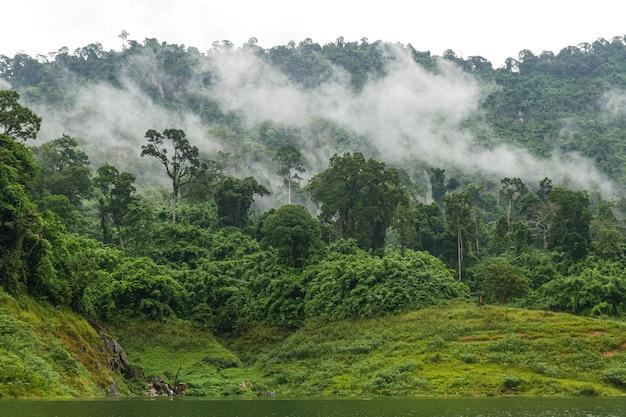 Mgły pokrywają zielony las.