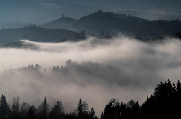 Mgły w lesie