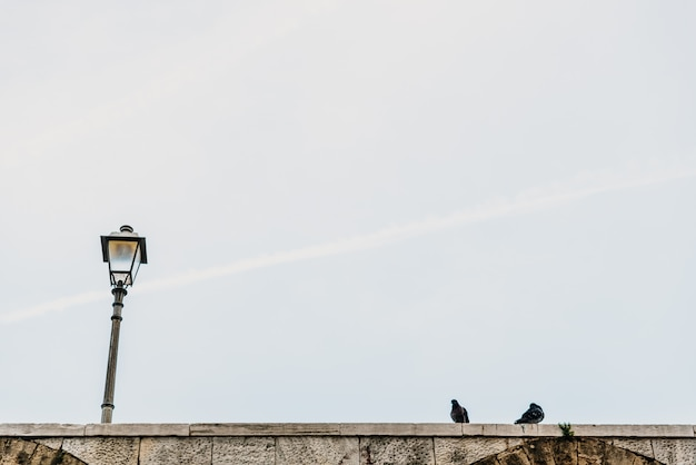 Miastowy latarni ulicznej tło z dnia gołębiem.