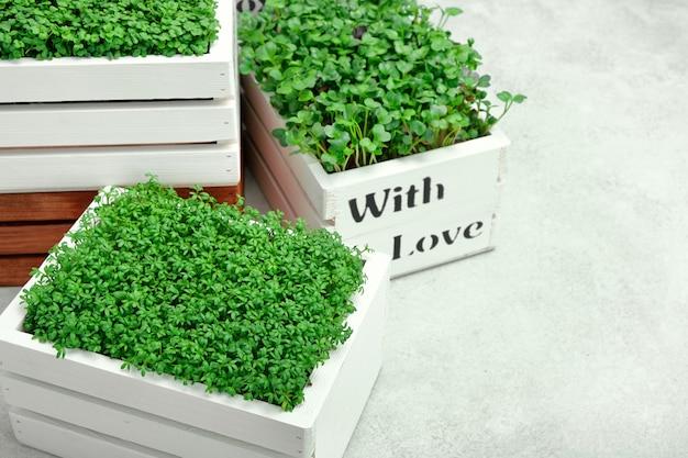 Microgreeny w białych drewnianych pudełkach