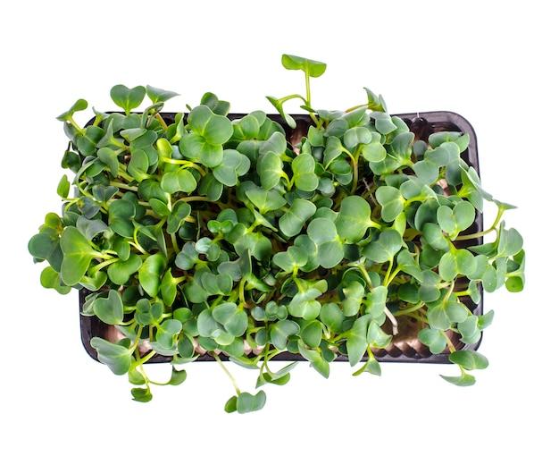 Microgreeny wyrastające z nasion