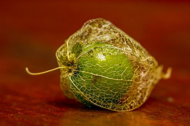 Miechunka mielona (physalis alkekengi), po indonezyjsku znana jako ciplukan, jest bogata w witaminy i dobre dla zdrowia. nazwa zwyczajowa jako lampion chiński i lampion japoński, z suchą korą, w płytkim skupieniu.