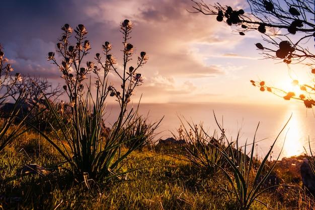 Między zachodem a łodygami trawy