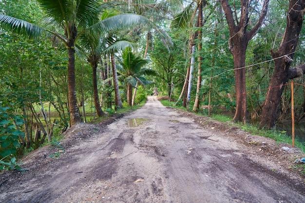 Miejsc docelowych podróży drzewa palmowego świeżość pieszo środowiska