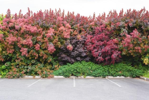 Miejsce parkingowe za ścianą drzew