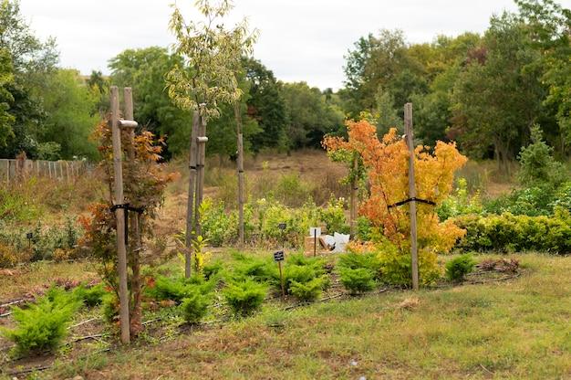 Miejski ogród z uprawianymi roślinami
