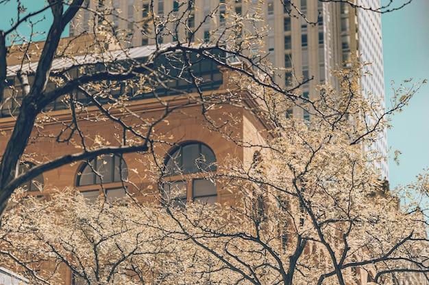 Miejski styl życia w mieście denver w stanie kolorado.