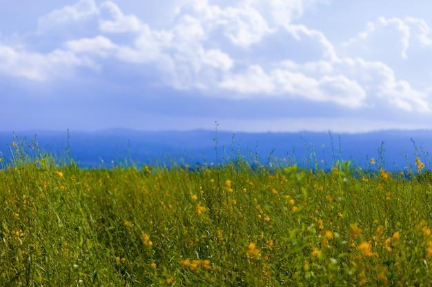 Miękka ostrość koloru żółtego pole pod niebieskim niebem. tło natury