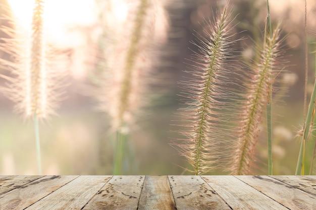 Miękka ostrość łąkowy kwiat z słońce promieniami, kwiecisty tło.