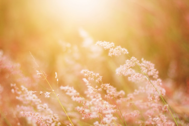 Miękka ostrość piękna trawa kwitnie w naturalnym światła słonecznego tle