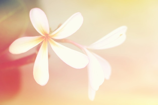 Miękki i rozmyty kwiat z gradientowym słodkim koloru tłem