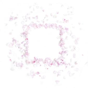 Miękki pastelowy różowy kolor płatków z miejscem na tekst. leżał płasko. widok z góry.