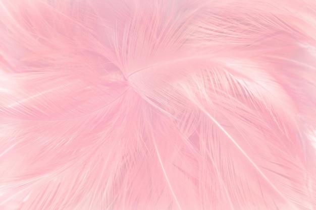 Miękki różowy piórek tekstury tło.