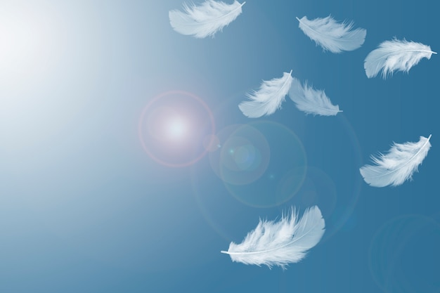 Miękkie białe pióra unoszące się na niebie