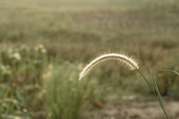 Miękkie fokus kwiat łąki z promieniami słońca, kwiatu tła.