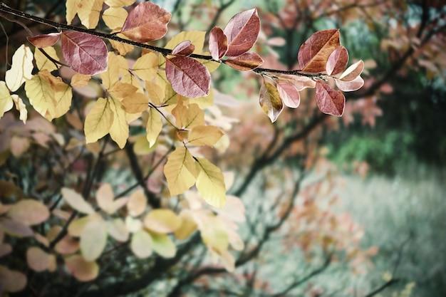 Miękkie jesienne tło z jasnymi liśćmi, natura tapety, selektywne foucs. stylizacja retro, filtr z folii vintage