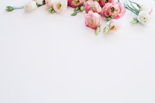 Miękkie różowe róże kwitnące