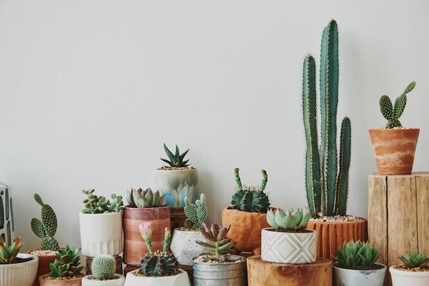 Mieszane Kaktusy I Sukulenty W Małych Doniczkach Darmowe Zdjęcia