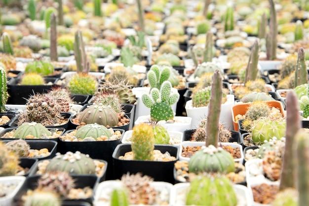 Mieszane sukulenty lub kaktus. mały kaktus w doniczkach do sprzedania.