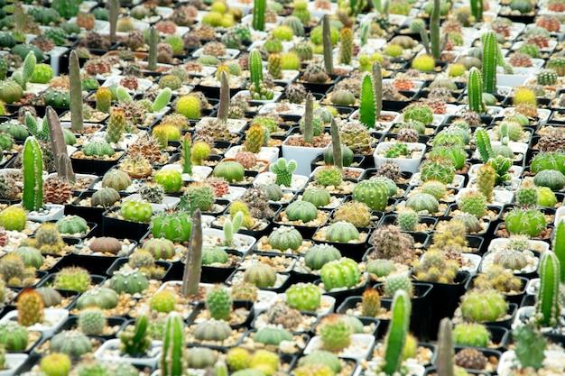 Mieszane sukulenty lub kaktus