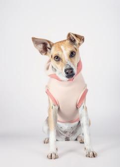 Mieszanego trakenu psa obsiadanie na białym tle z czułym spojrzeniem w kierunku kamery czeka adoptującym. koncepcja przyjęcia.