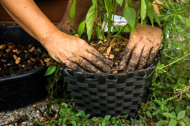 Mieszanie gleby z nawozami organicznymi do sadzenia roślinności gołymi rękoma
