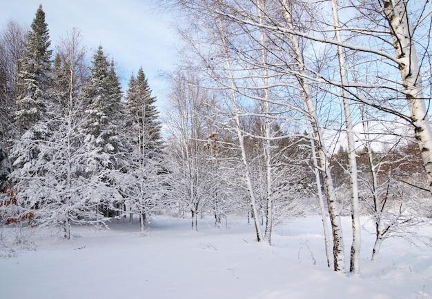 Mieszany las w zima śniegu