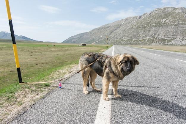 Mieszany rasa na drodze w górach