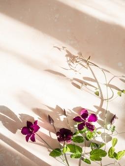 Mieszkanie leżał skład purpurowych kwiatów powojników i liści w słońcu na różowym tle. widok z góry.
