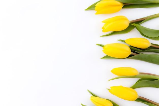 Mieszkanie leżało z żółtymi kwiatami tulipanów na białym tle. koncepcja karty z pozdrowieniami na wielkanoc, dzień matki, międzynarodowy dzień kobiet, dzień świętego walentego.