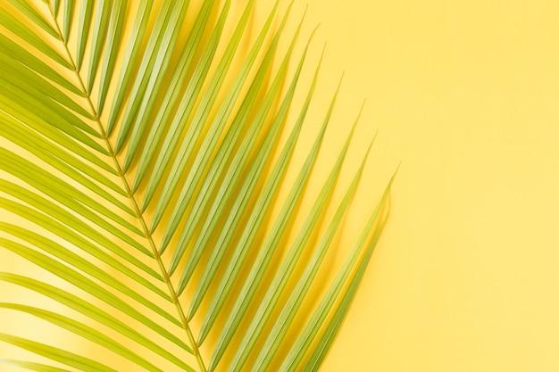 Mieszkanie nieatutowej fotografii kokosowy liść na żółtym tła, odgórnego widoku i kopii przestrzeni