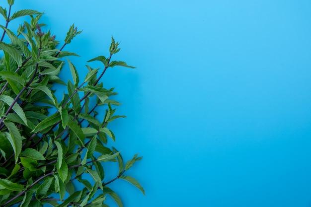 Mieszkanie świeckich skład ze świeżych liści mięty na niebieskim tle koloru