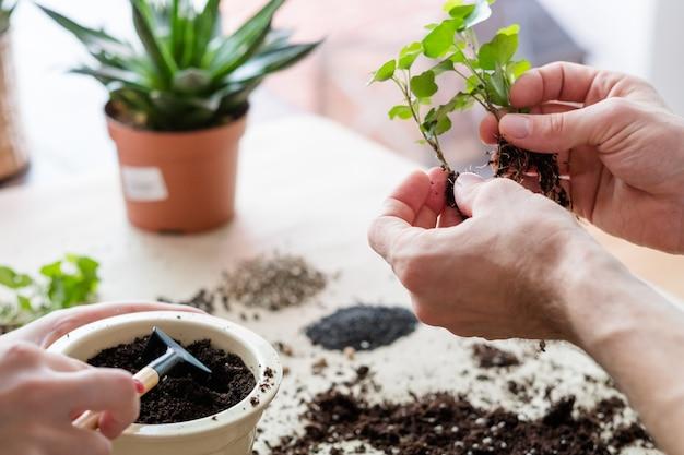 Mieszkanie w ogrodzie. para zaangażowana w doniczkę. roślina doniczkowa z glebą i narzędziami ogrodniczymi.